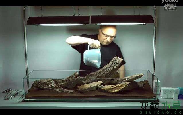 分享【西安女王大帆】James Findley大师的一个矮缸作品 西安龙鱼论坛 西安博特第8张