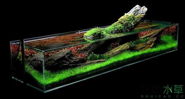 分享【西安女王大帆】James Findley大师的一个矮缸作品 西安龙鱼论坛 西安博特第6张
