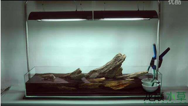 分享【西安女王大帆】James Findley大师的一个矮缸作品 西安龙鱼论坛 西安博特第9张