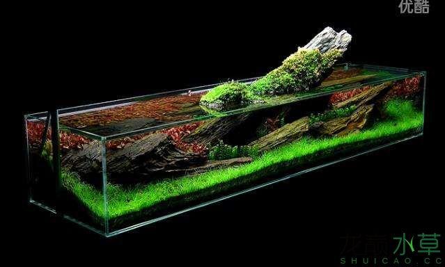 分享【西安女王大帆】James Findley大师的一个矮缸作品 西安龙鱼论坛 西安博特第12张