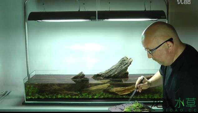 分享【西安女王大帆】James Findley大师的一个矮缸作品 西安龙鱼论坛 西安博特第11张