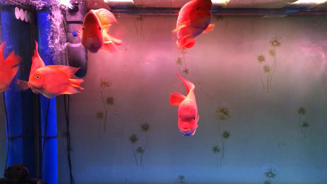 换水喽~ 西安观赏鱼信息