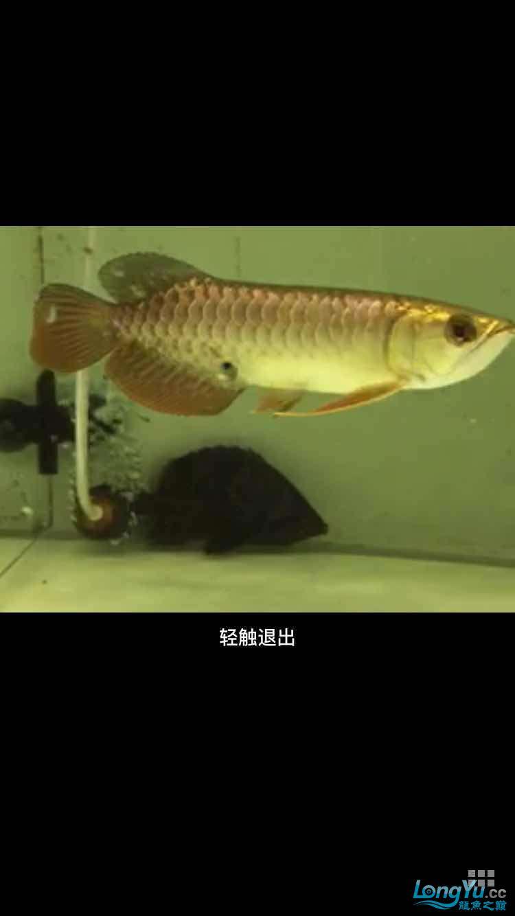 急急急在线等 西安龙鱼论坛 西安博特第1张