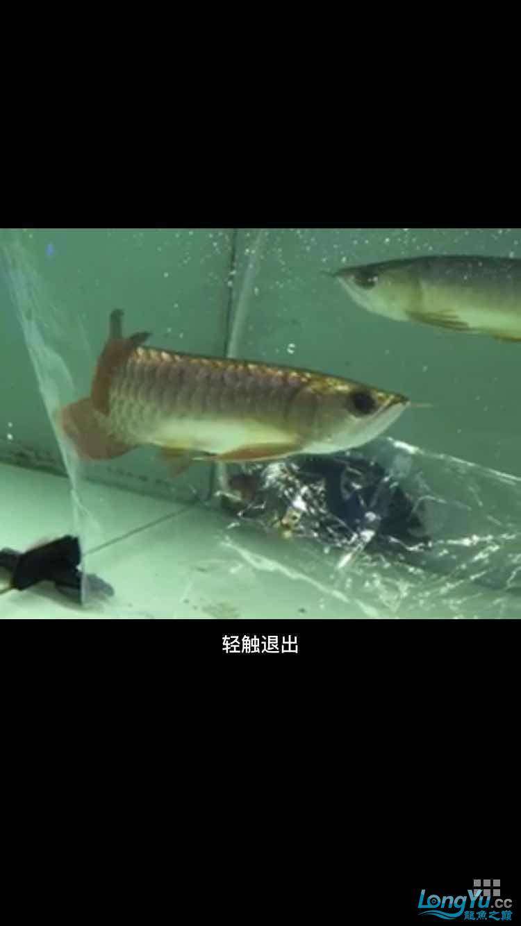 急急急在线等 西安龙鱼论坛 西安博特第2张