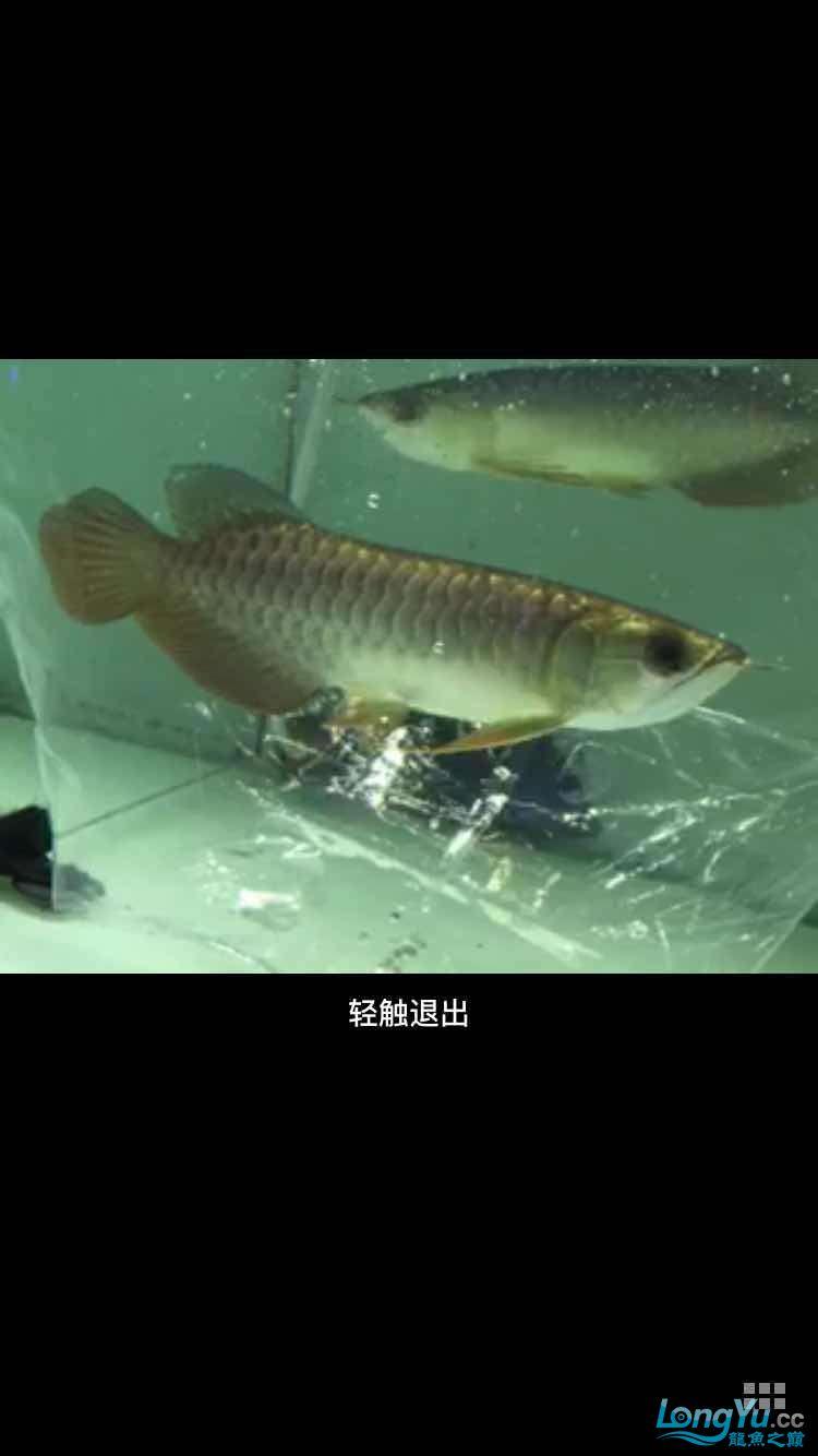 急急急在线等 西安龙鱼论坛 西安博特第3张