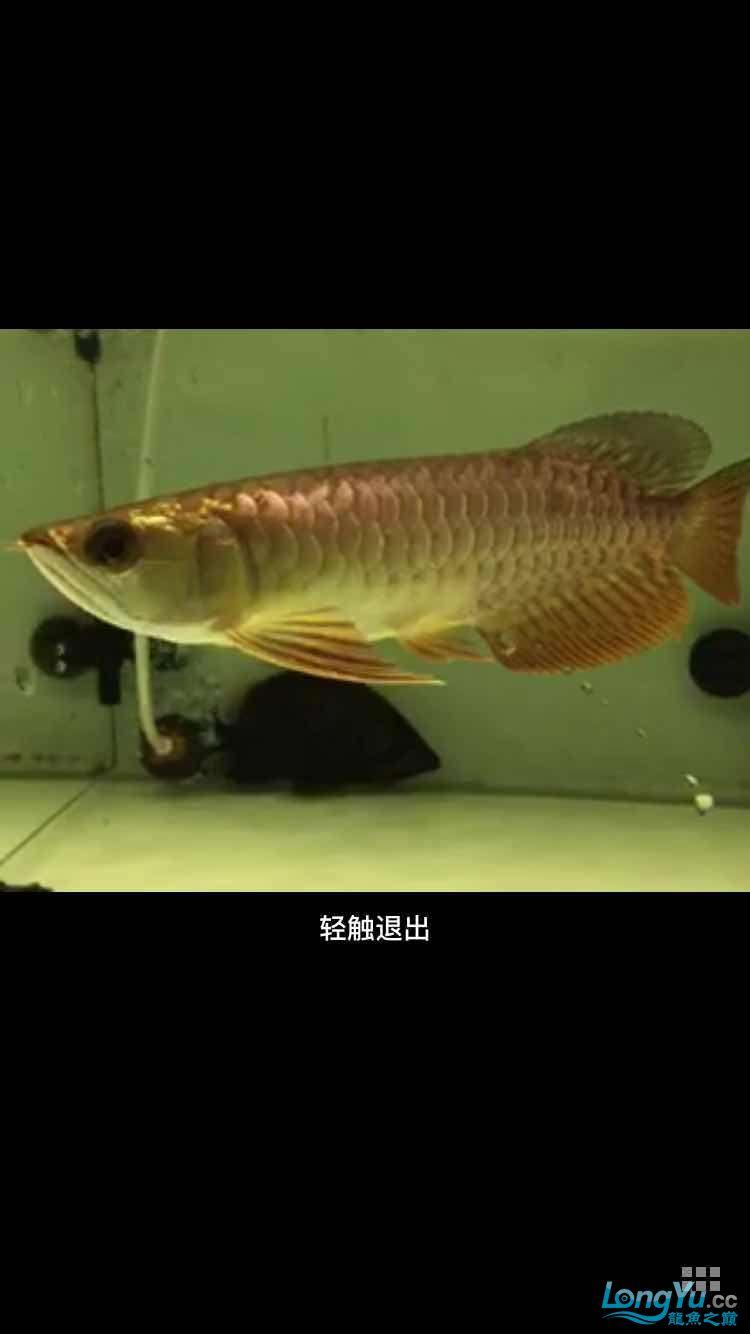 急急急在线等 西安龙鱼论坛 西安博特第5张