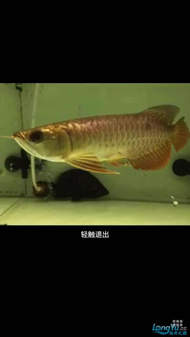 急急急在线等 西安龙鱼论坛 西安博特第4张