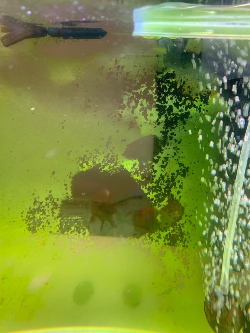 西安哪个水族馆有金龙苦逼一顿酒青苔两行泪 西安观赏鱼信息 西安博特第1张