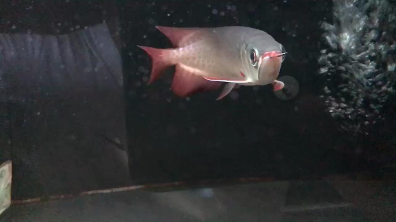 大神西安花鸟鱼虫都有什么们帮忙看下这只 西安观赏鱼信息