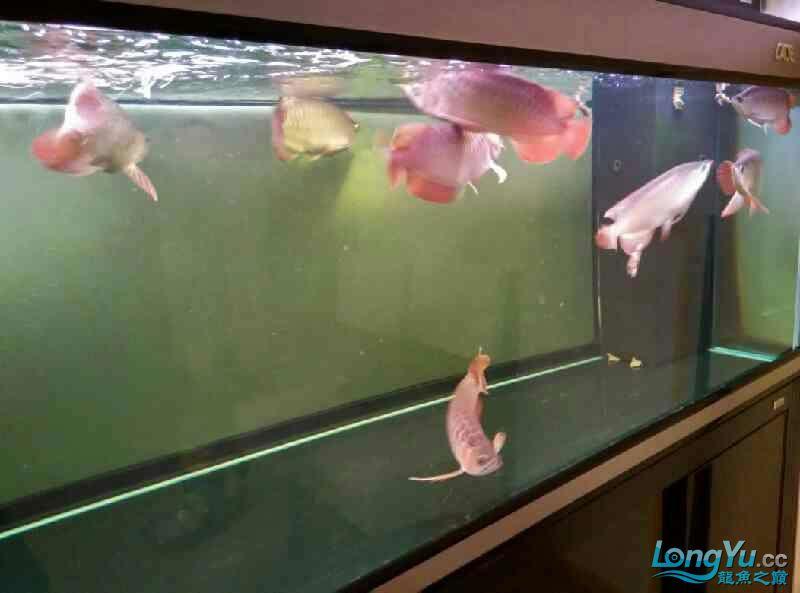 今天好像受到惊吓了 西安观赏鱼信息 西安博特第2张