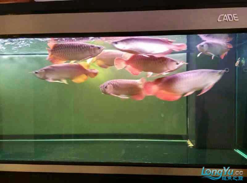 今天好像受到惊吓了 西安观赏鱼信息 西安博特第1张