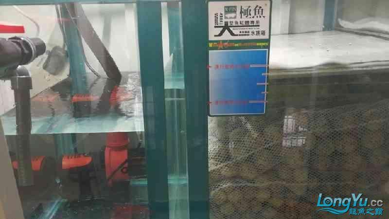 建西安华为手机专卖店个档新缸到了【西安毛毛狗头鱼】 西安龙鱼论坛 西安博特第2张