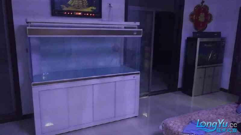 建西安华为手机专卖店个档新缸到了【西安毛毛狗头鱼】 西安龙鱼论坛 西安博特第3张
