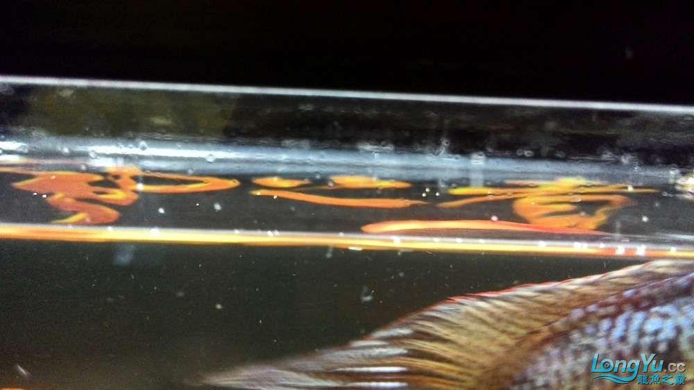 大家请教一下几个问题还有我的底滤下水有必要改成雨淋管下水么? 西安龙鱼论坛 西安博特第28张