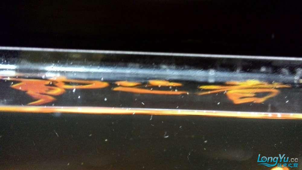 大家请教一下几个问题还有我的底滤下水有必要改成雨淋管下水么? 西安龙鱼论坛 西安博特第29张