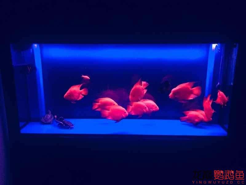 感觉已经潜水半年了 西安观赏鱼信息 西安博特第6张