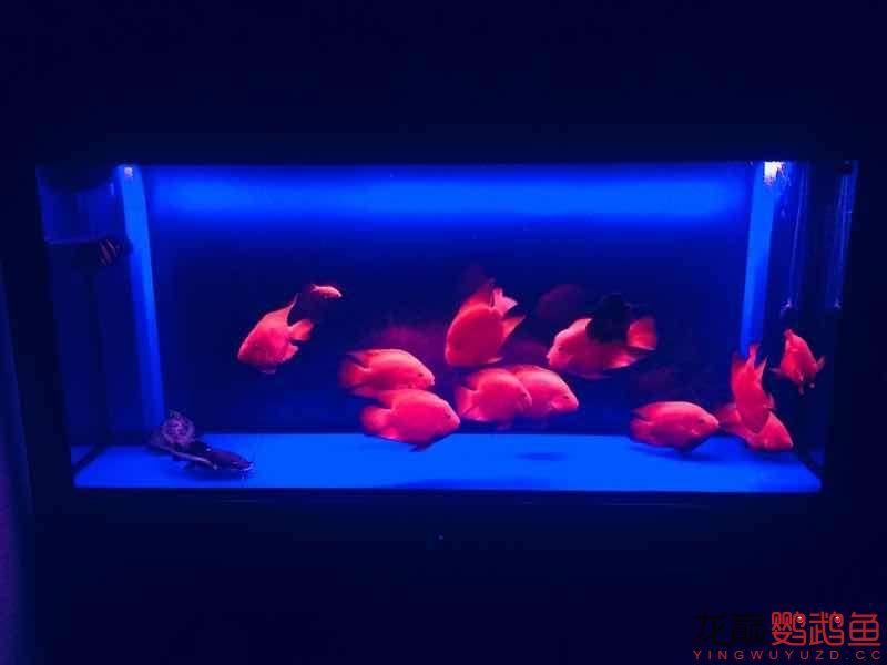 感觉已经潜水半年了 西安观赏鱼信息 西安博特第8张