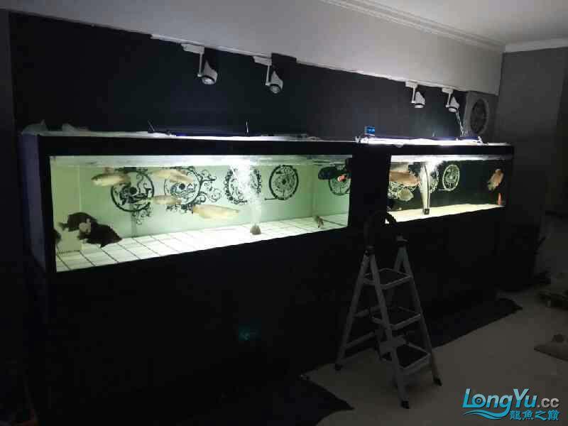 大半夜的更新下图片 西安观赏鱼信息 西安博特第3张