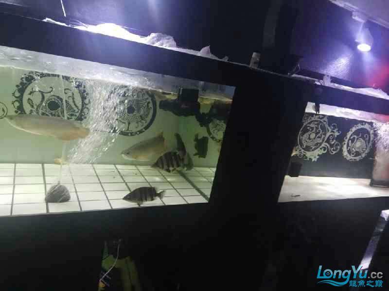 大半夜的更新下图片 西安观赏鱼信息 西安博特第6张