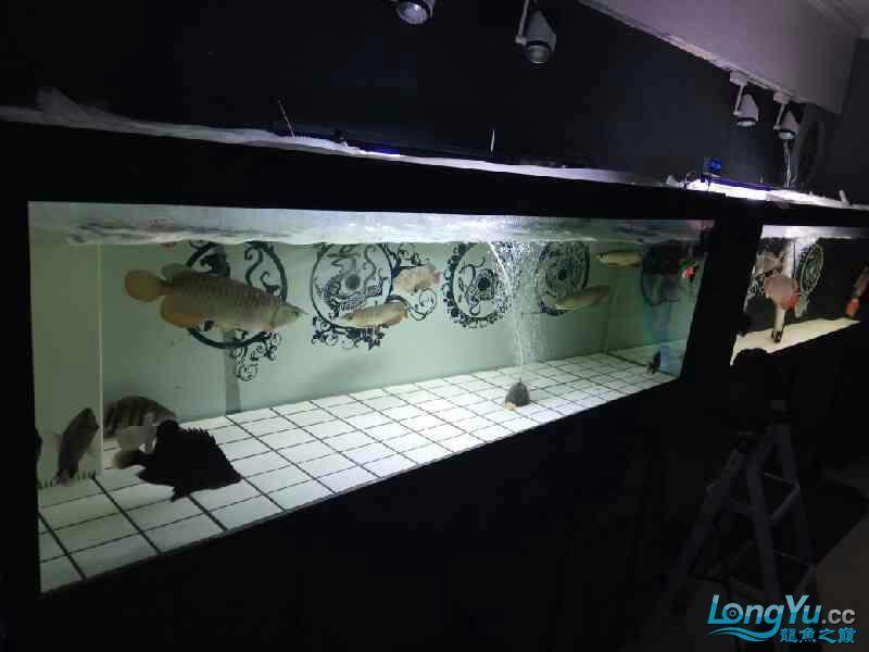 大半夜的更新下图片 西安观赏鱼信息 西安博特第4张