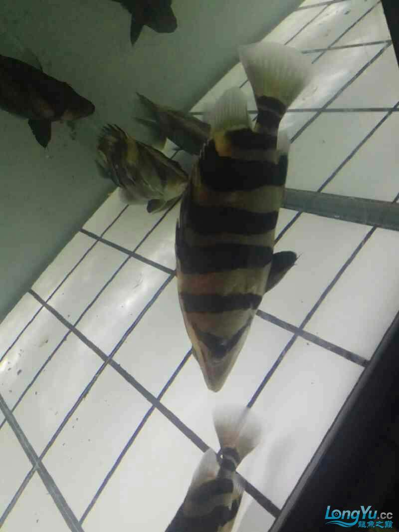 大半夜的更新下图片 西安观赏鱼信息 西安博特第5张
