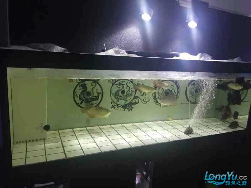 大半夜的更新下图片 西安观赏鱼信息 西安博特第7张