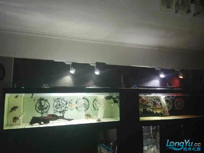 大半夜的更新下图片 西安观赏鱼信息 西安博特第9张