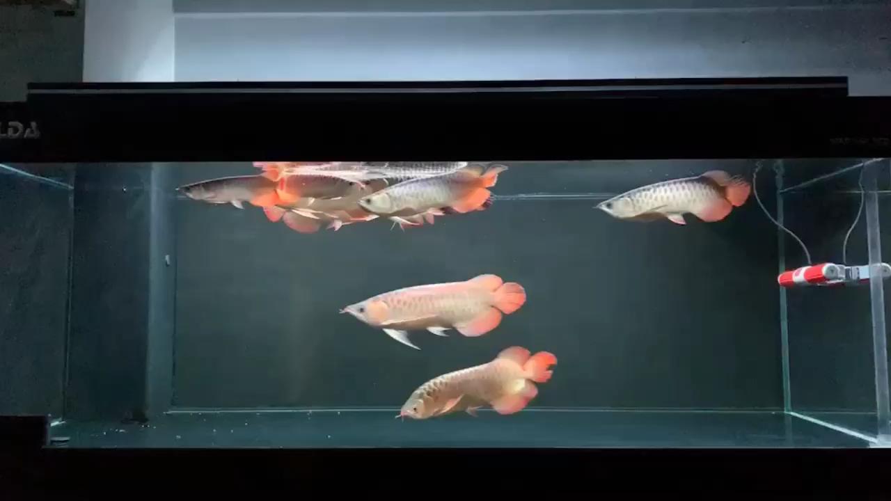 噢西安花鸟鱼虫的意思噢 西安龙鱼论坛 西安博特第1张