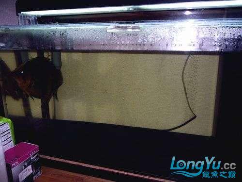 大老虎来了 西安观赏鱼信息 西安博特第2张