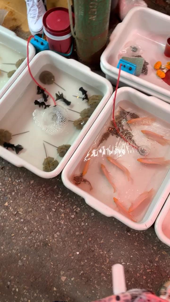 第一次见到卖这个西安鱼缸过滤 西安龙鱼论坛 西安博特第1张