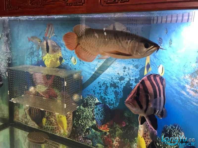 求大师看看是什么品种谢谢 西安龙鱼论坛 西安博特第4张