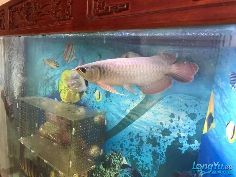 求大师看看是什么品种谢谢 西安龙鱼论坛 西安博特第3张