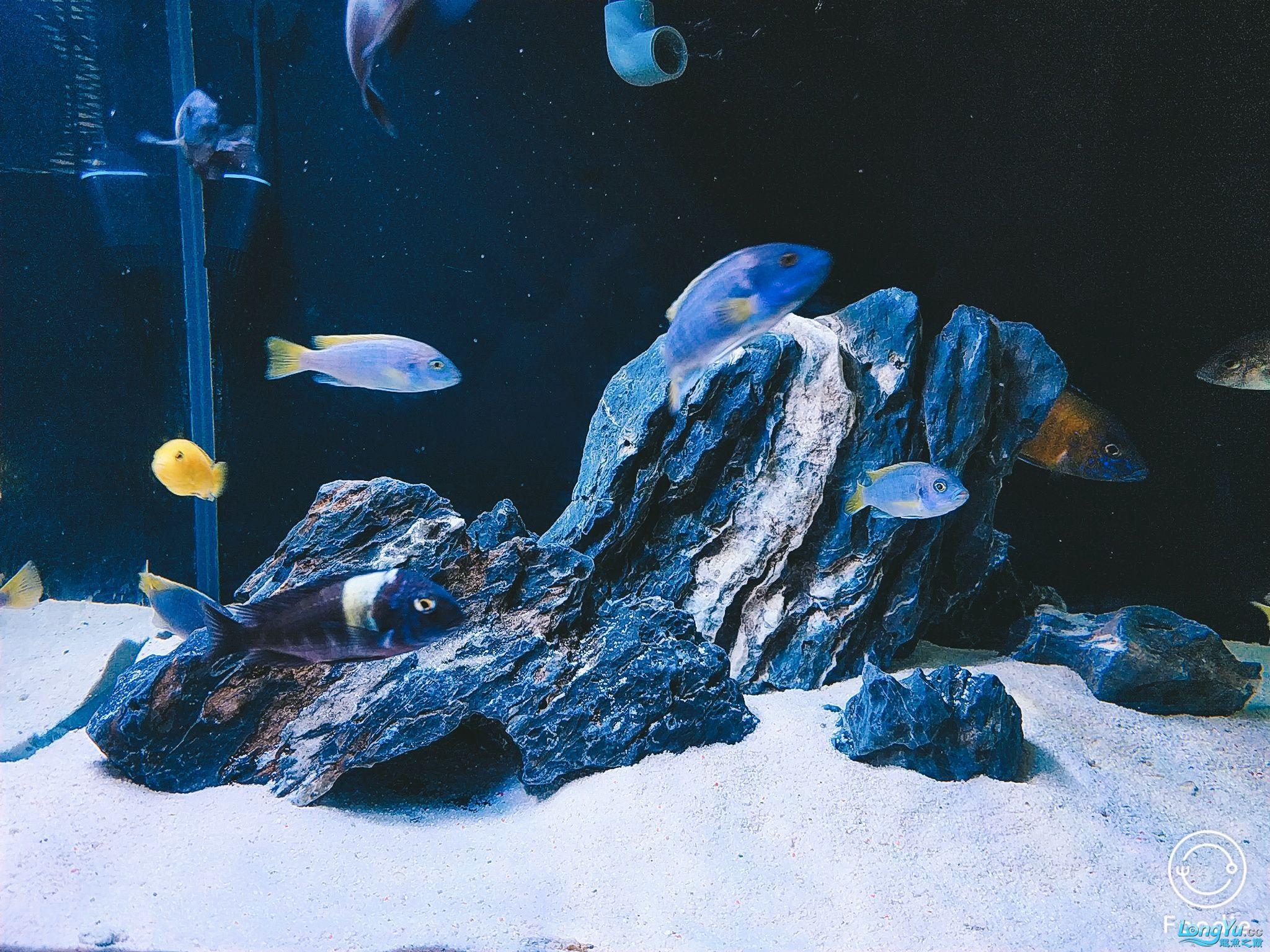 【西安海水鱼批发】到底是看石头还是看鱼呢 西安龙鱼论坛 西安博特第1张