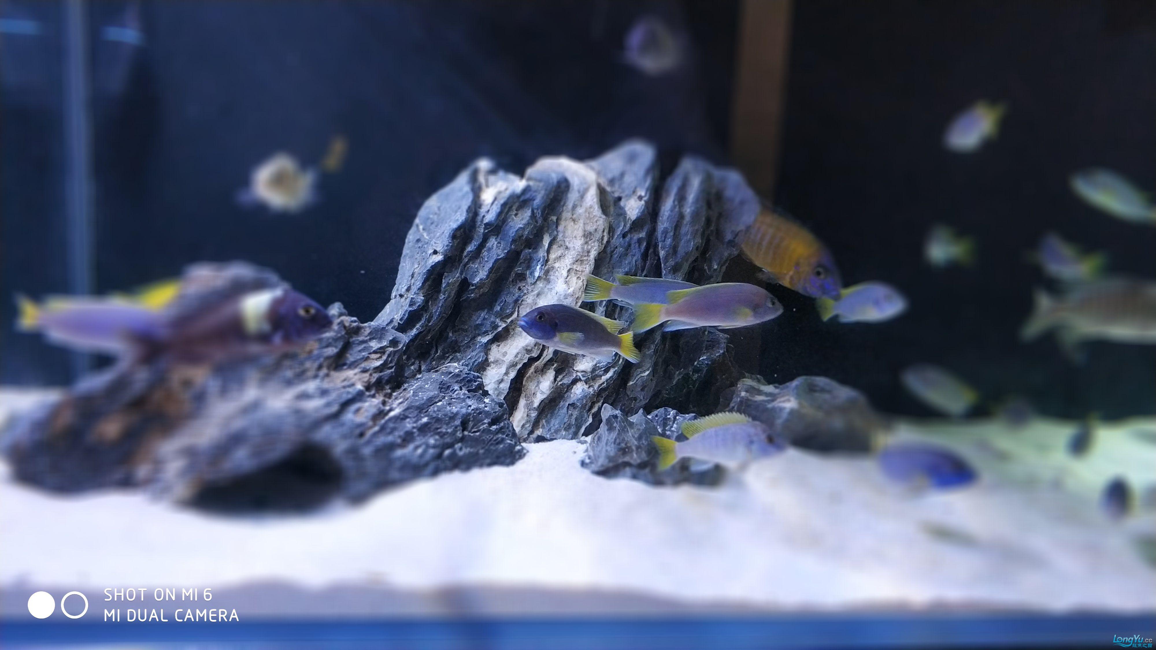 【西安海水鱼批发】到底是看石头还是看鱼呢 西安龙鱼论坛 西安博特第5张