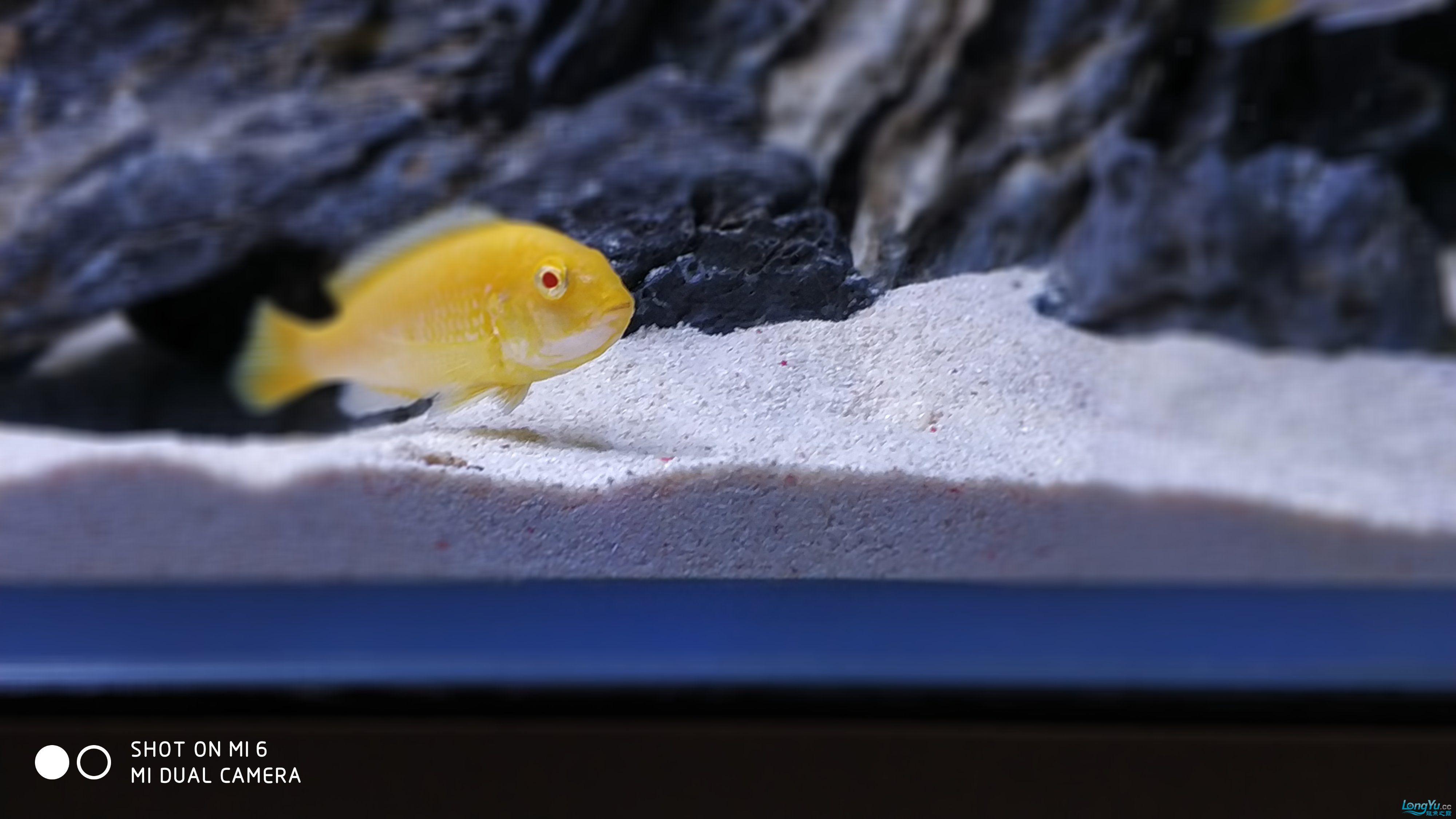 【西安海水鱼批发】到底是看石头还是看鱼呢 西安龙鱼论坛 西安博特第7张