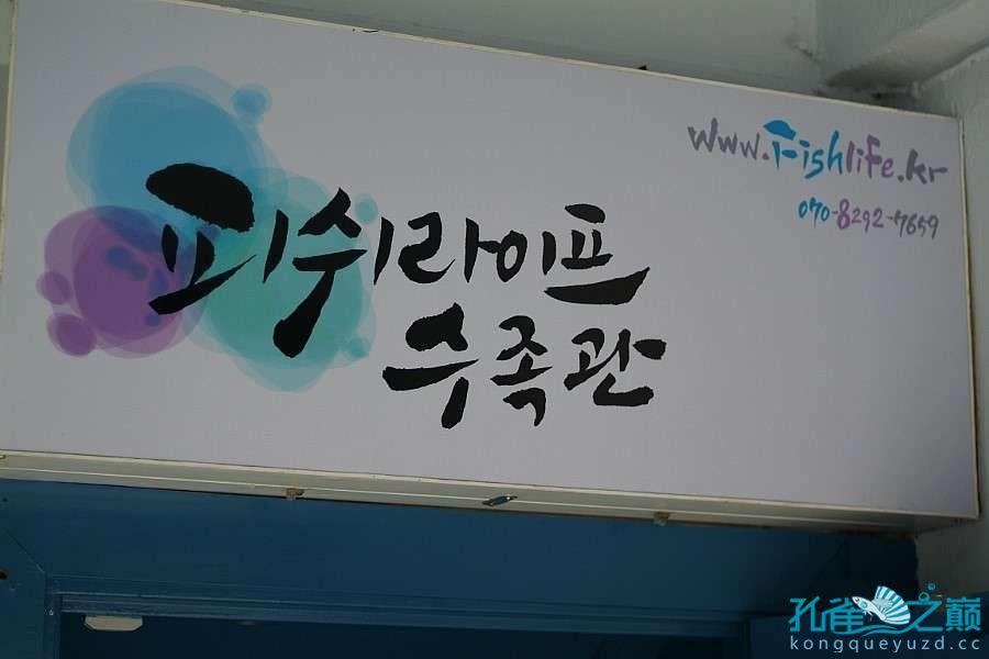 西安鱼缸清洗韩国东巴比伦水族馆第二帖
