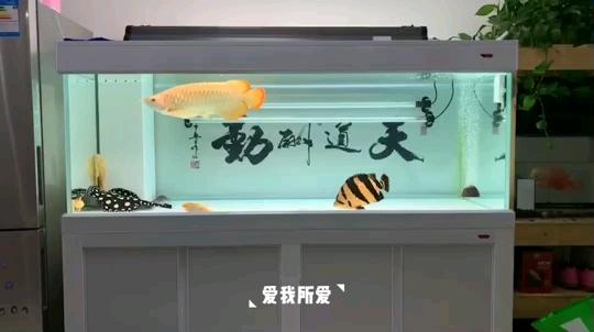 爱我所爱【西安水族展地址】 西安龙鱼论坛 西安博特第1张