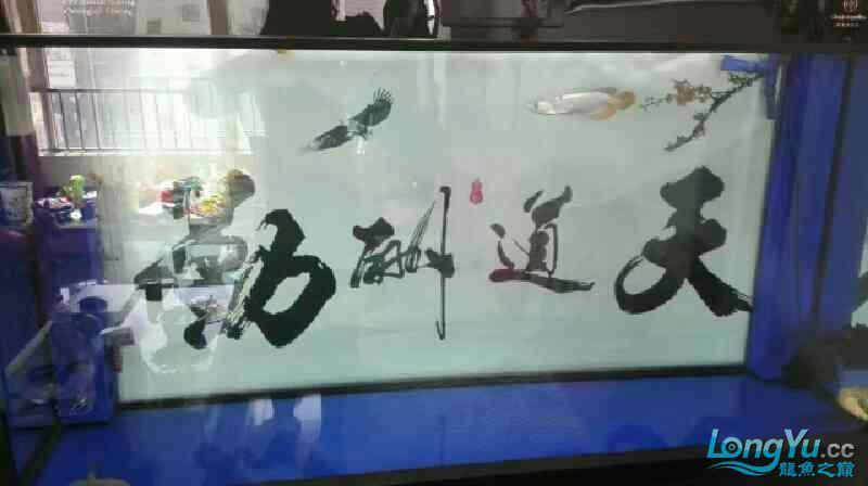 西安祥龙鱼缸金龙 金吉罗混养还有粗纹大老虎 西安龙鱼论坛 西安博特第7张