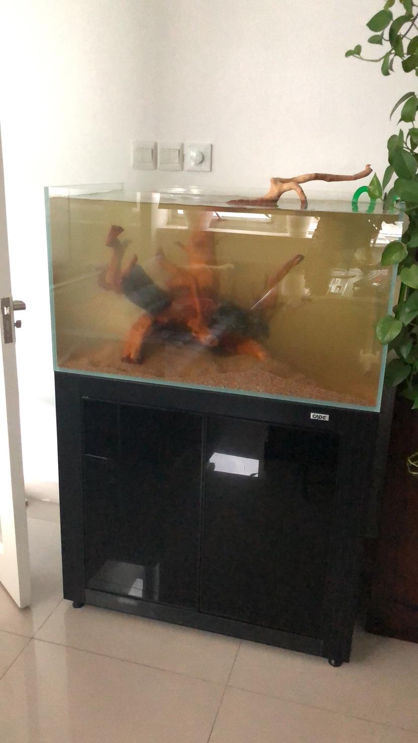 西安黑云鱼怎么养家有小缸初开成 西安观赏鱼信息 西安博特第2张