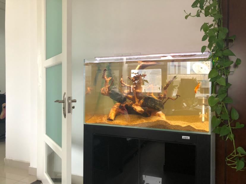西安黑云鱼怎么养家有小缸初开成 西安观赏鱼信息 西安博特第4张