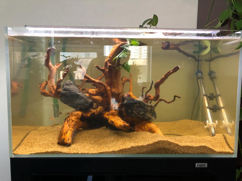 西安黑云鱼怎么养家有小缸初开成 西安观赏鱼信息 西安博特第6张