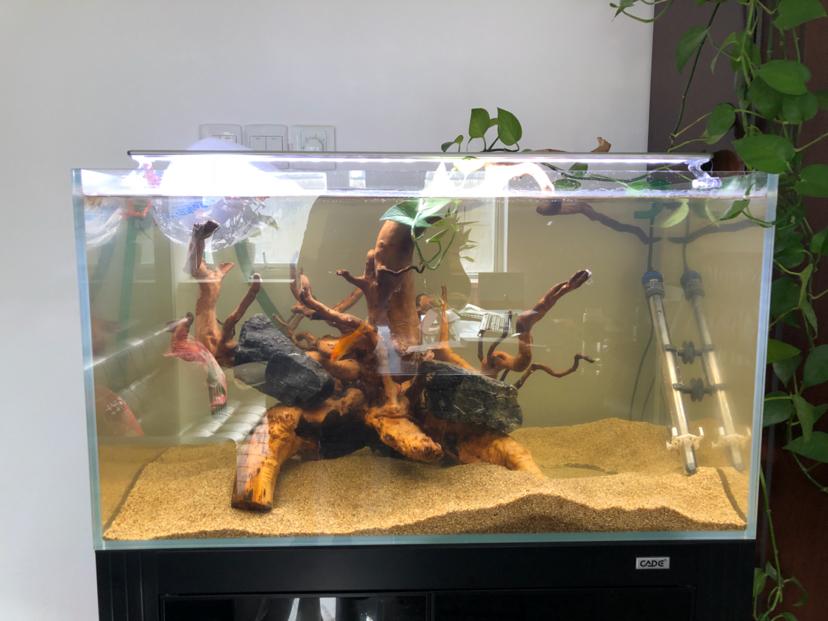 西安黑云鱼怎么养家有小缸初开成 西安观赏鱼信息 西安博特第5张