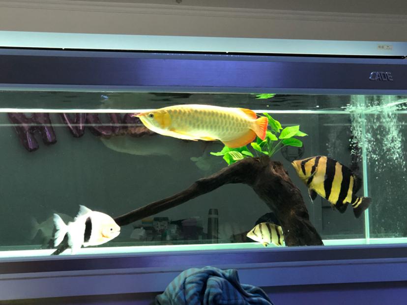 西安黑云鱼怎么养家有小缸初开成 西安观赏鱼信息 西安博特第8张