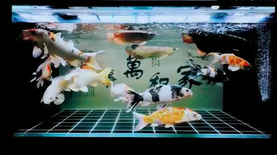 清爽 西安龙鱼论坛 西安博特第1张
