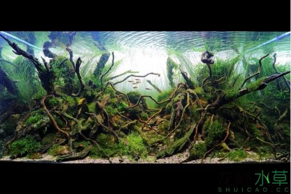 分享分享 西安龙鱼论坛 西安博特第2张