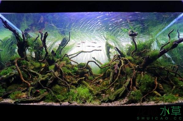 分享分享 西安龙鱼论坛 西安博特第5张
