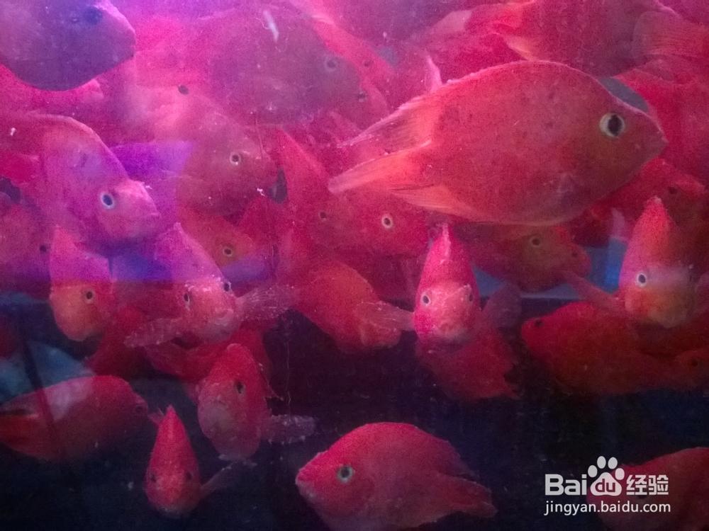 求教鱼缸的静音 西安龙鱼论坛