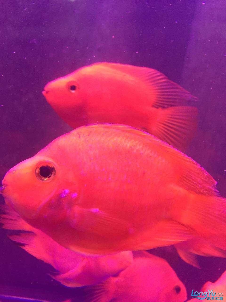 西安鸭嘴鱼怎么做好吃各位鱼友各位大神帮帮我 西安龙鱼论坛