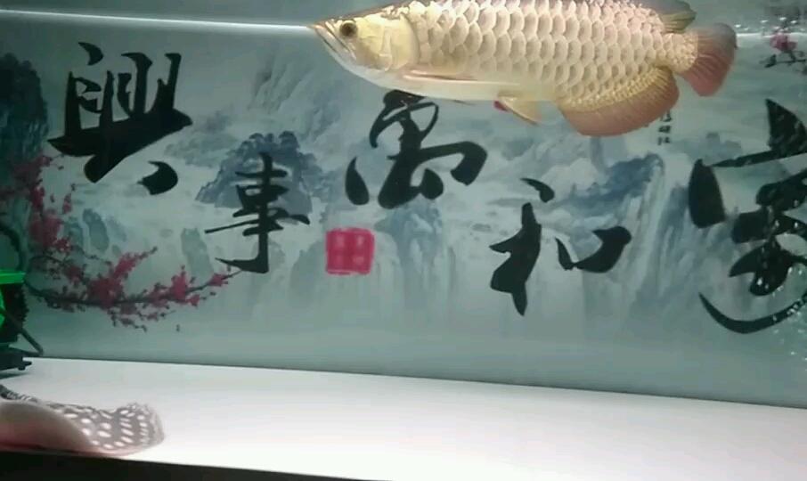 关于爆灯抽奖 西安观赏鱼信息