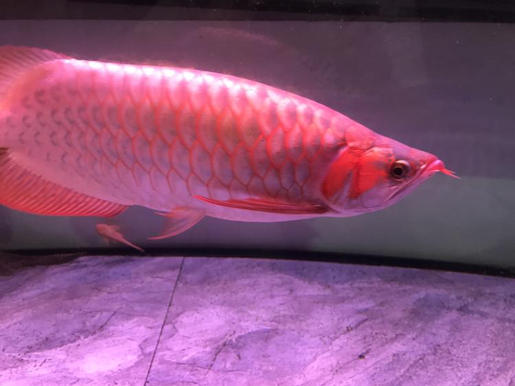 大家评价一下 西安观赏鱼信息 西安博特第1张